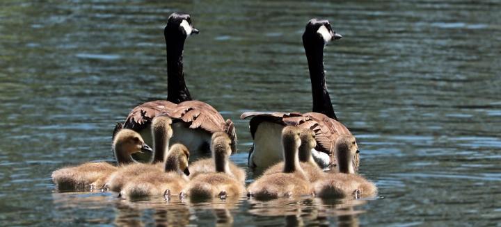 Moja životinjska obitelj