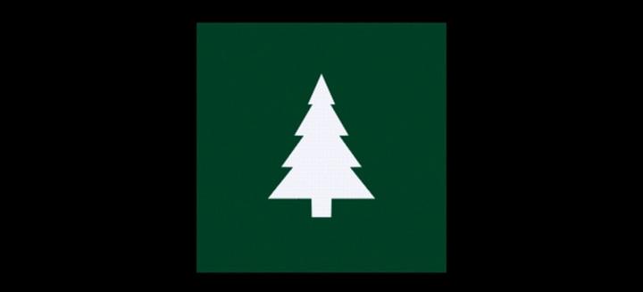 Vita jela, zelen bor